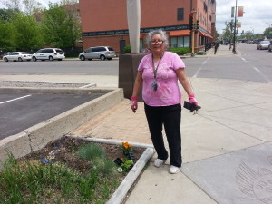 Felicia Wesaw nurtures Sweet Grass near My Relations Gallery, Pow Wow Grounds, and NACDI office for its healing effect on passersby.