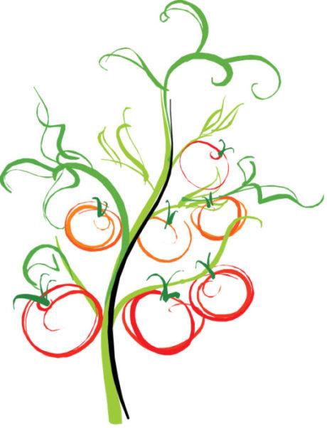 green-tomato-2